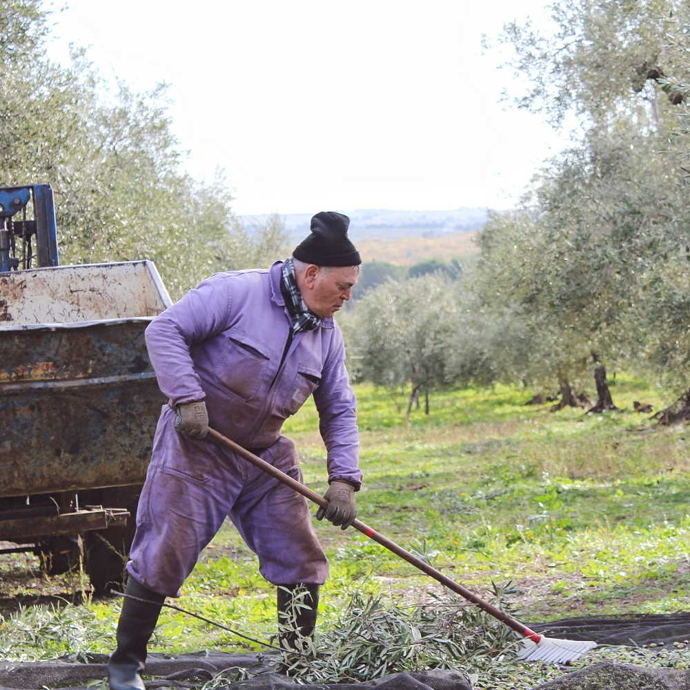 Agricola Marmo - Il nostro olio - la raccolta