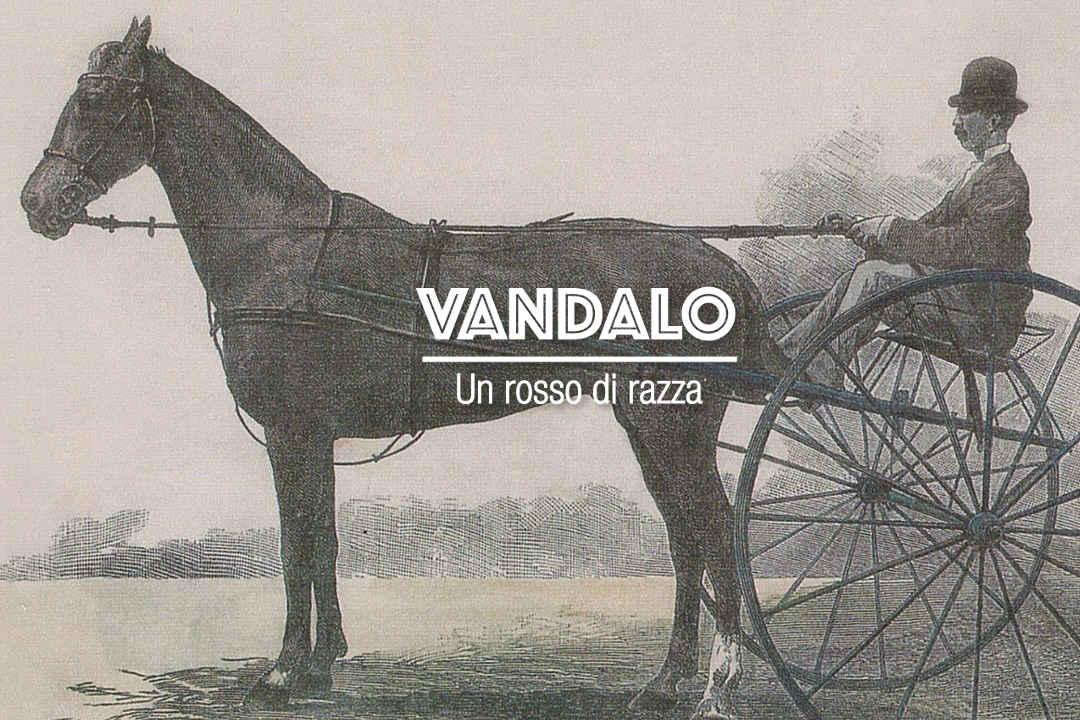 Il vandalo - un vino di razza