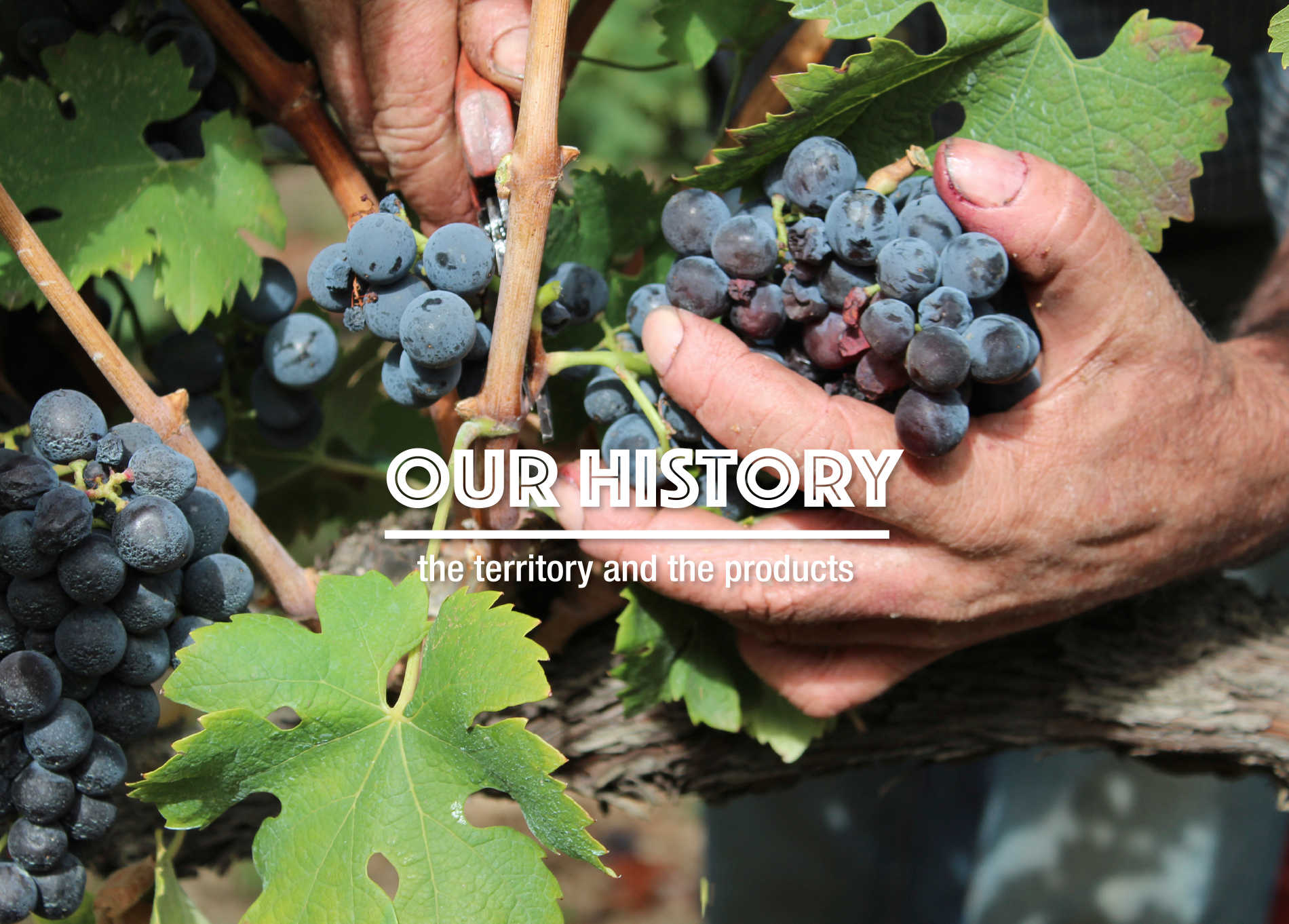 Agricola Marmo - Our history