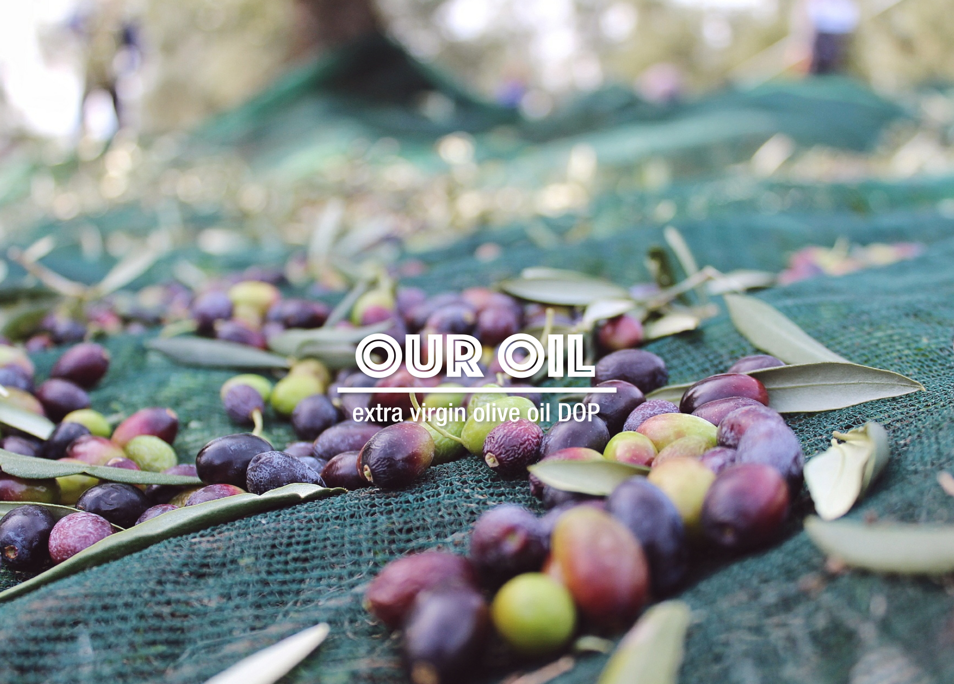 Azienda Agricola Marmo - our Oil